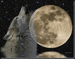 Full Moon Wolf