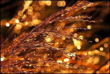 Golden Tears