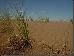 Sandy Waste Land
